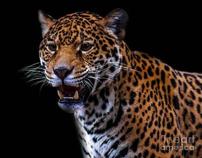 Photograph - Jaguar A Seven by Ken Frischkorn