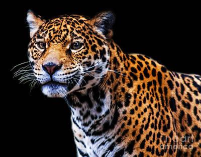 Photograph - Jaguar A Six by Ken Frischkorn