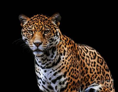 Photograph - Jaguar A Three by Ken Frischkorn