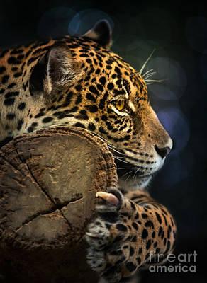 Jaguar  Art Print by Anek Suwannaphoom