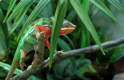 Jaguar Animal Photograph - Jaguar Chameleon by Jim Hughes