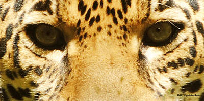 Photograph - Jaguar Eyes by DiDi Higginbotham