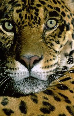 Large Mammals Photograph - Jaguar Face (panthera Onca by Andres Morya Hinojosa
