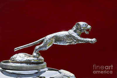 Photograph - Jaguar Hood Ornament by Dennis Hedberg