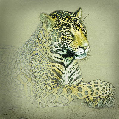 Photograph - Jaguar Lady by Sonya Lang