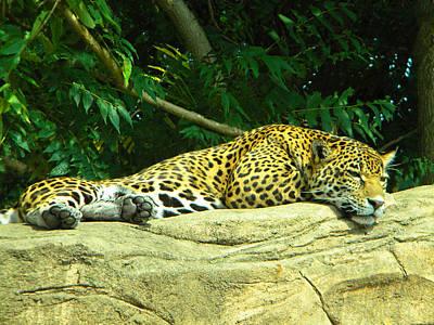 Mountain Landscape - Jaguar by Phillip W Strunk