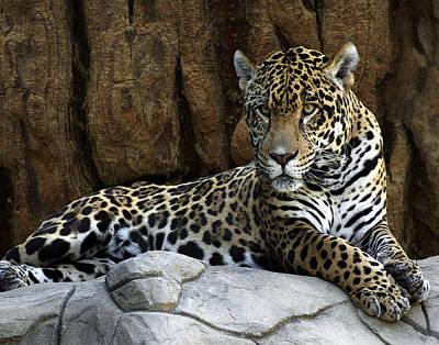 Digital Art - Jaguar Portrait  by TnBackroadsPhotos