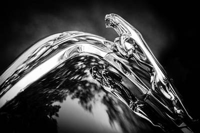 Photograph - Jaguar Reflection by Karen Saunders