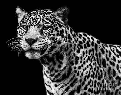 Photograph - Jaguar Six by Ken Frischkorn