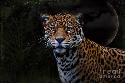 Photograph - Jaguar Three by Ken Frischkorn