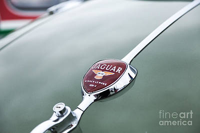 Photograph - Jaguar Xk 140 by Jim Orr
