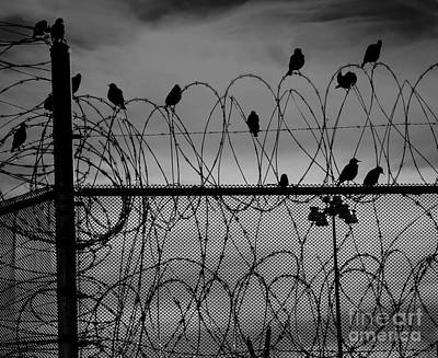 Photograph - Jail Birds by Phil Cardamone