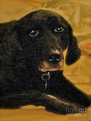 Muzzle Digital Art - Jaime A Black Lab by Maureen Tillman