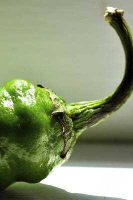 Photograph - Jalapeno Pepper by Kathy Flood