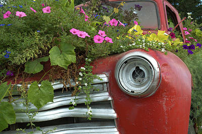 Photograph - Jalopy Garden by Arthur Fix