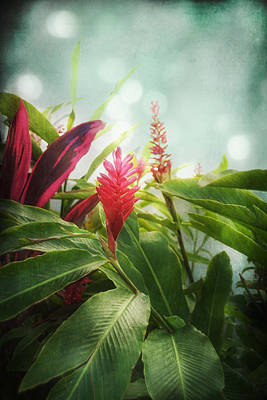 Photograph - Jamaican Ginger by Tammy Wetzel