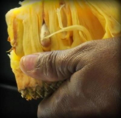 Karen People Photograph - Jamaican Jack Fruit by Karen Wiles