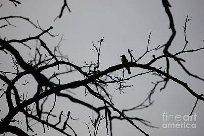 Photograph - Jammer Bird And Tree Silhouette by First Star Art