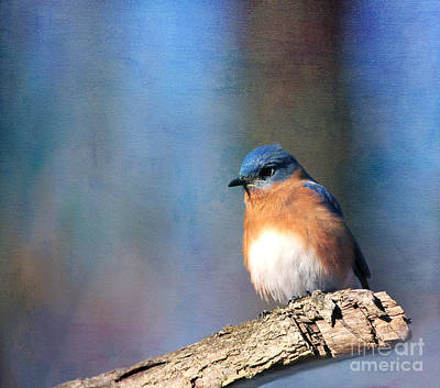 January Bluebird Art Print