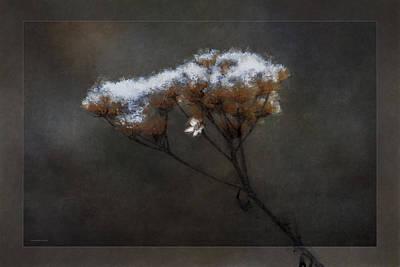 January Bouquet Art Print by Ron Jones