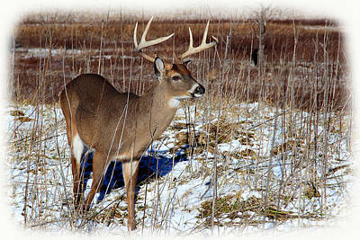 Photograph - January Buck by Michael Eingle