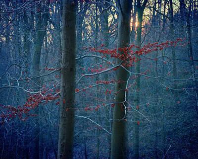 Photograph - January Embers by Studio Yuki