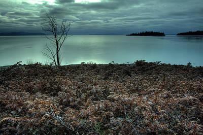 Lakeshore Drive Photograph - January Juniper Bush by Jakub Sisak