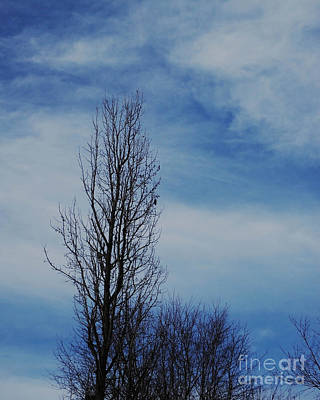 Photograph - January Tree by Lizi Beard-Ward