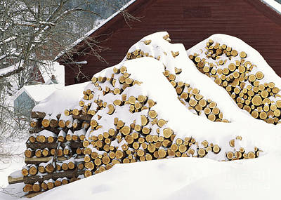 Photograph - January Woodpile by Alan L Graham