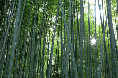 Bamboo Photograph - Japan, Kyoto Sunburst by Jaynes Gallery