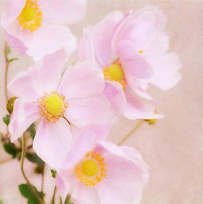 Photograph - Japanese Anemone Cubed by Fraida Gutovich