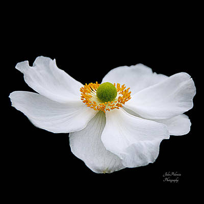 Photograph - Japanese Anemone Squared by Julie Palencia