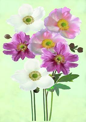 Hybrida Photograph - Japanese Anemones (anemone X Hybrida) by Archie Young