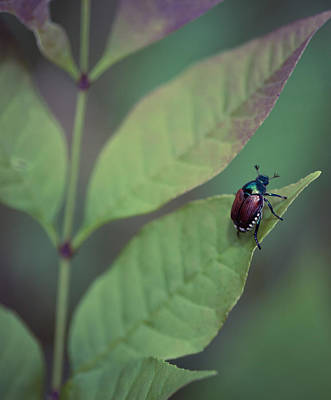 Photograph - Japanese Beetle On A Leaf by Melinda Fawver