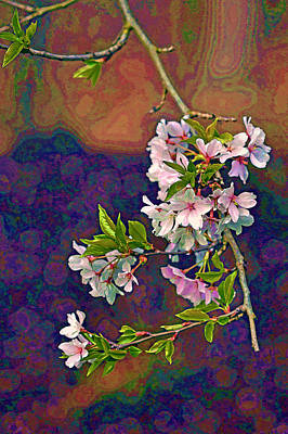 Photograph - Japanese Cherry Blossom Branch by Jerry Gammon