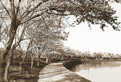 Cherry Trees Drawing - Japanese Cherry Blossoms, Cherry Trees, Waterfronts by Litz Collection
