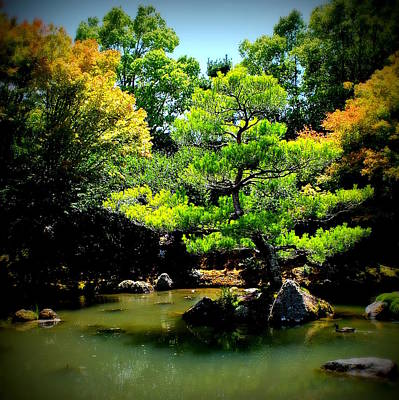 Photograph - Japanese Garden Of Contemplation by Guy Pettingell