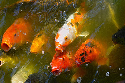Photograph - Japanese Gardens 9068 by Ricardo J Ruiz de Porras