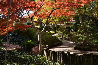 Photograph - Japanese Gardens 9554 by Ricardo J Ruiz de Porras