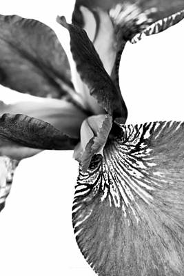 Photograph - Japanese Iris Flower Monochrome 2 by Jennie Marie Schell