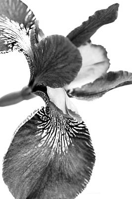 Photograph - Japanese Iris Flower Monochrome by Jennie Marie Schell