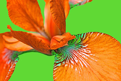 Photograph - Japanese Iris Orange Lime Green Five by Jennie Marie Schell