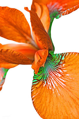 Photograph - Japanese Iris Orange White Two by Jennie Marie Schell