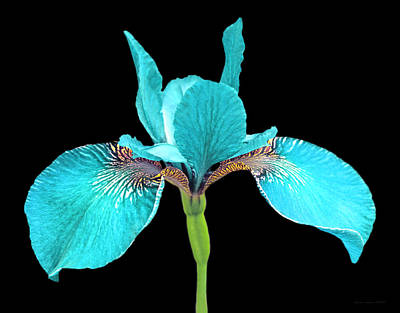 Jewel Tone Photograph - Japanese Iris Turquoise Black Three by Jennie Marie Schell