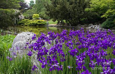 Photograph - Japanese Irises by Chris Scroggins