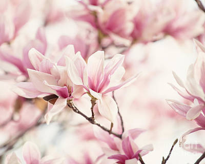 Flowers Photograph - Japanese Magnolia II by Erin Johnson