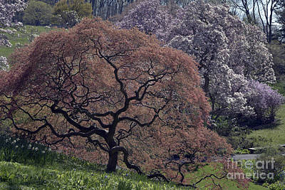 Clouds Rights Managed Images - Japanese Maple 7156 Royalty-Free Image by Terri Winkler