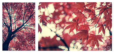 Chinese Red Maple Tree Photograph - Japanese Maple Collage by Hannes Cmarits