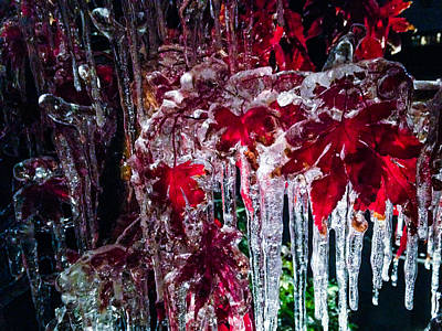 Photograph - Japanese Maple Ice by Jeff Mize