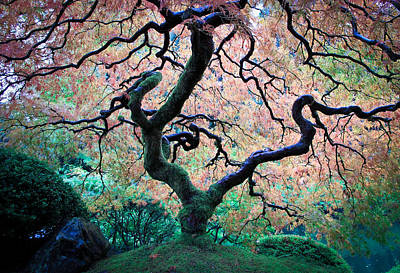 Photograph - Japanese Maple In Autumn by Athena Mckinzie
